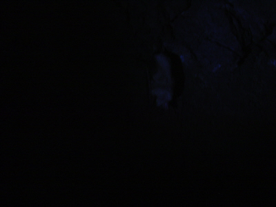 Caving - A dark image of a bat in a cave